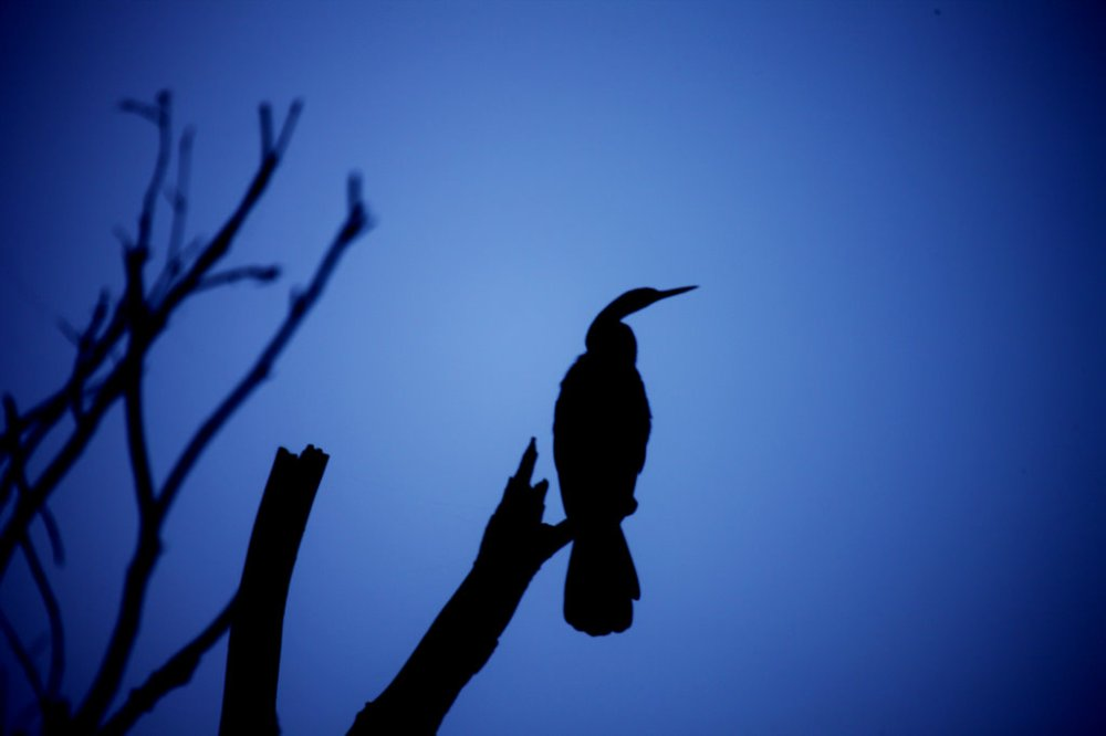 bird backlit-344648262-O